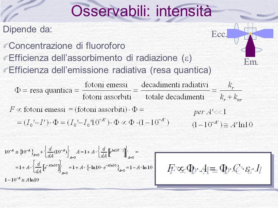 Osservabili: intensità Dipende da: Concentrazione di fluoroforo Efficienza dellassorbimento di radiazione ( ) Efficienza dellemissione radiativa (resa