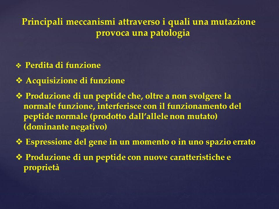 Principali meccanismi attraverso i quali una mutazione provoca una patologia Perdita di funzione Acquisizione di funzione Produzione di un peptide che