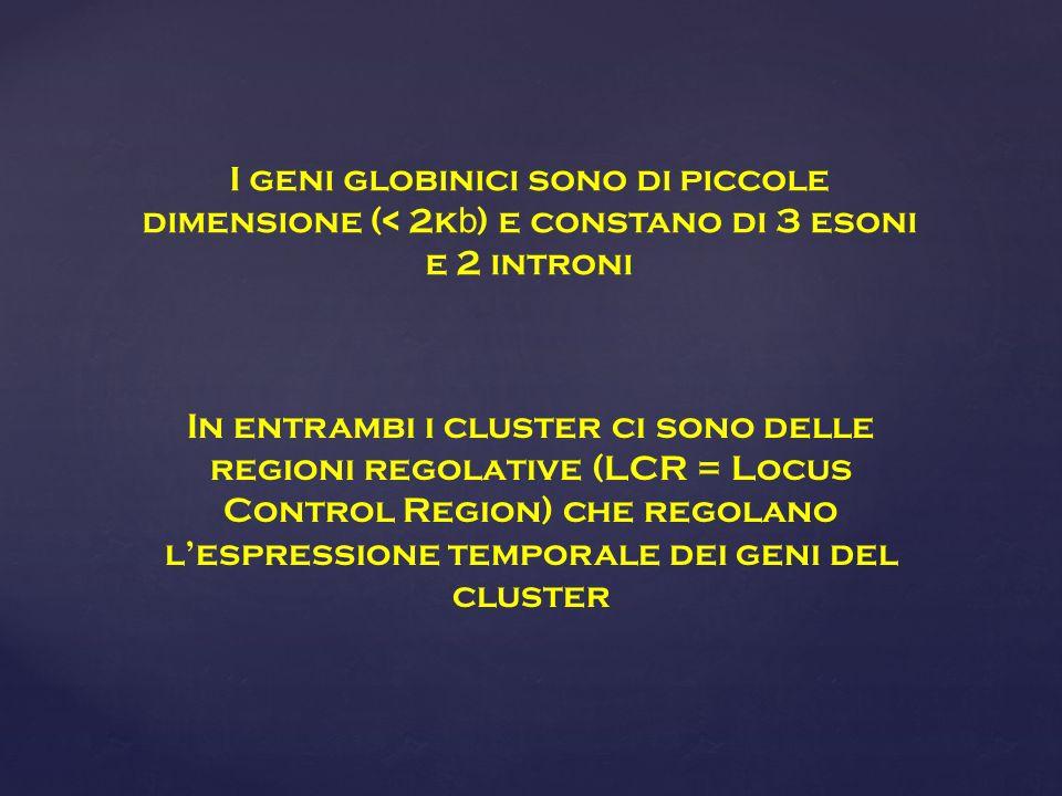In entrambi i cluster ci sono delle regioni regolative (LCR = Locus Control Region) che regolano lespressione temporale dei geni del cluster I geni globinici sono di piccole dimensione (< 2k b ) e constano di 3 esoni e 2 introni