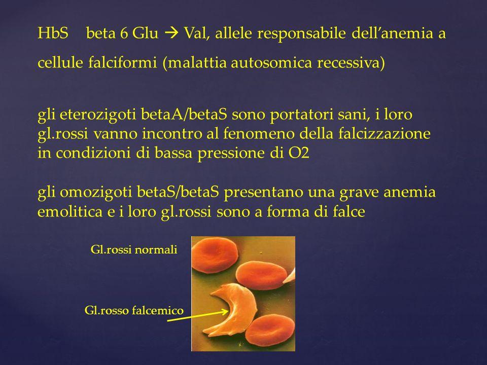 HbSbeta 6 Glu Val, allele responsabile dellanemia a cellule falciformi (malattia autosomica recessiva) gli eterozigoti betaA/betaS sono portatori sani, i loro gl.rossi vanno incontro al fenomeno della falcizzazione in condizioni di bassa pressione di O2 gli omozigoti betaS/betaS presentano una grave anemia emolitica e i loro gl.rossi sono a forma di falce Gl.rossi normali Gl.rosso falcemico