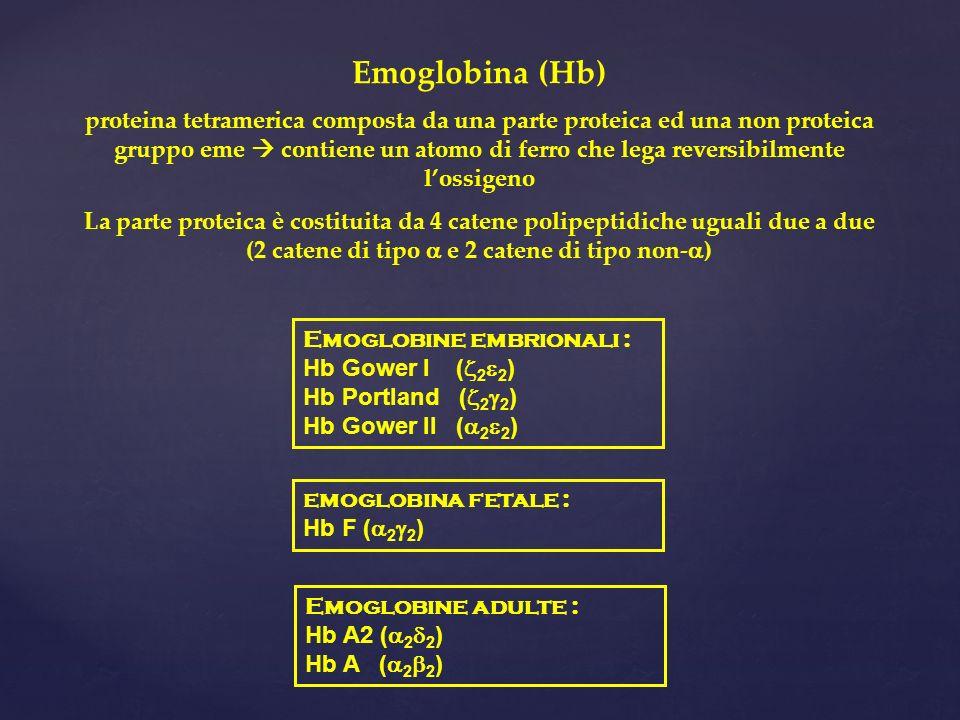Emoglobina (Hb) proteina tetramerica composta da una parte proteica ed una non proteica gruppo eme contiene un atomo di ferro che lega reversibilmente