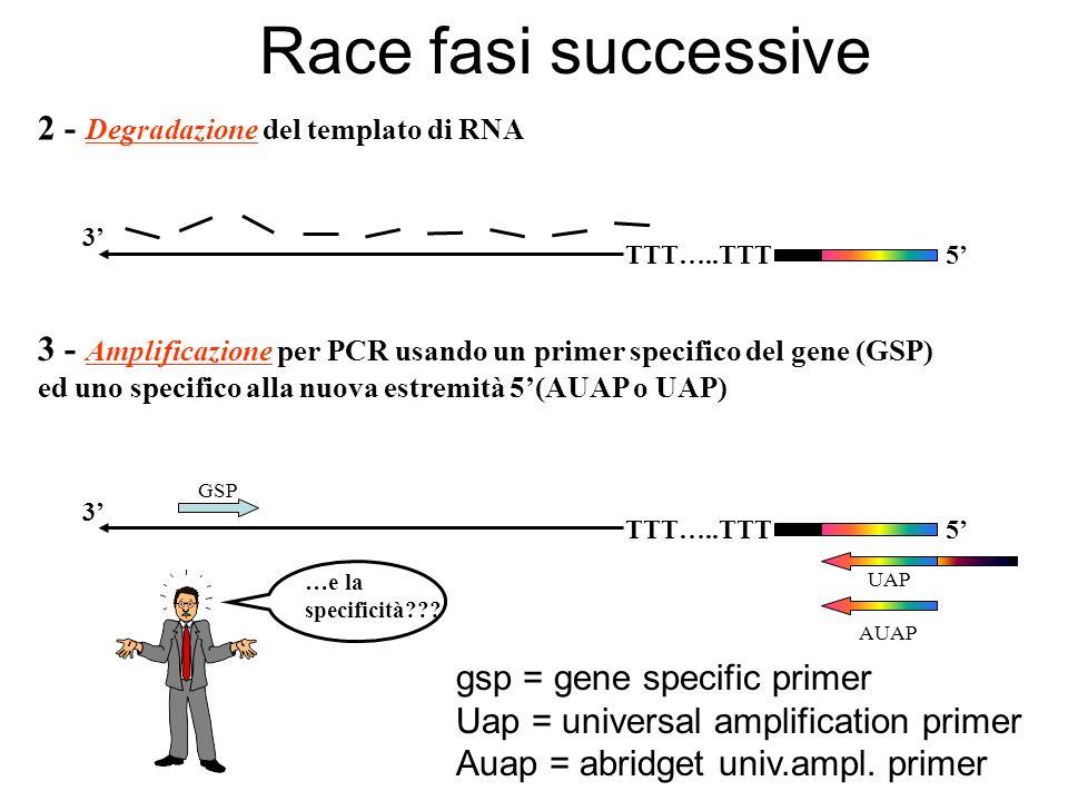 2 - Degradazione del templato di RNA TTT…..TTT5 3 3 - Amplificazione per PCR usando un primer specifico del gene (GSP) ed uno specifico alla nuova est
