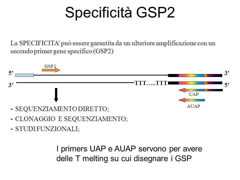 GSP 2 TTT…..TTT 5 3 AUAP UAP 3 5 La SPECIFICITA può essere garantita da un ulteriore amplificazione con un secondo primer gene specifico (GSP2) - SEQU