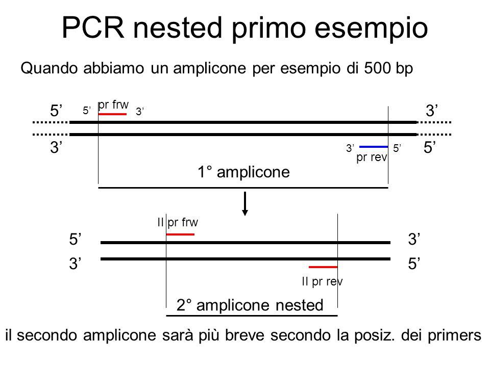 PCR nested primo esempio Quando abbiamo un amplicone per esempio di 500 bp 5 35 3 pr frw pr rev 5 5 3 3 1° amplicone 5 53 3 II pr frw II pr rev 2° amp