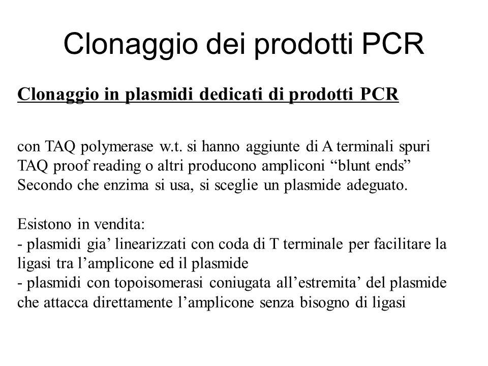 Clonaggio in plasmidi dedicati di prodotti PCR con TAQ polymerase w.t. si hanno aggiunte di A terminali spuri TAQ proof reading o altri producono ampl