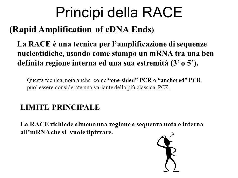 RACE 5 Cerchiamo il 5 ignoto Dobbiamo comunque ottenere il cDNA ed utiliziamo gli stessi metodi utilizzati per ottenere il cDNA della ricerca del 3 ignoto.