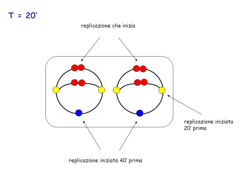 T = 20 replicazione iniziata 20 prima replicazione iniziata 40 prima replicazione che inizia
