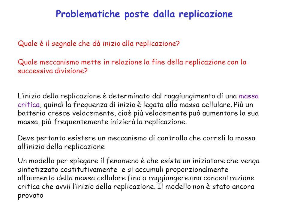 Problematiche poste dalla replicazione Quale è il segnale che dà inizio alla replicazione? Quale meccanismo mette in relazione la fine della replicazi