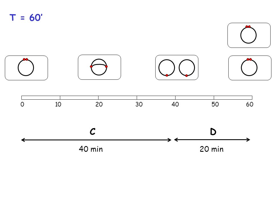 Una fase precoce della divisione nei batteri è la formazione dello Z ring a livello del sito di divisione.