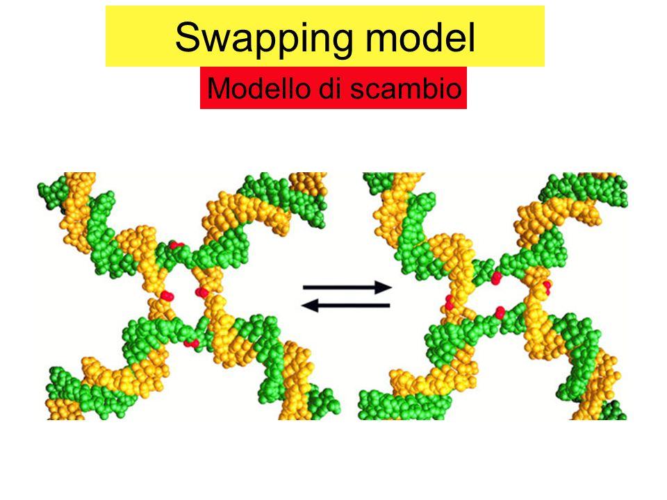 Modello di ricombinazione Intermedio cruciforme isomerizzazione