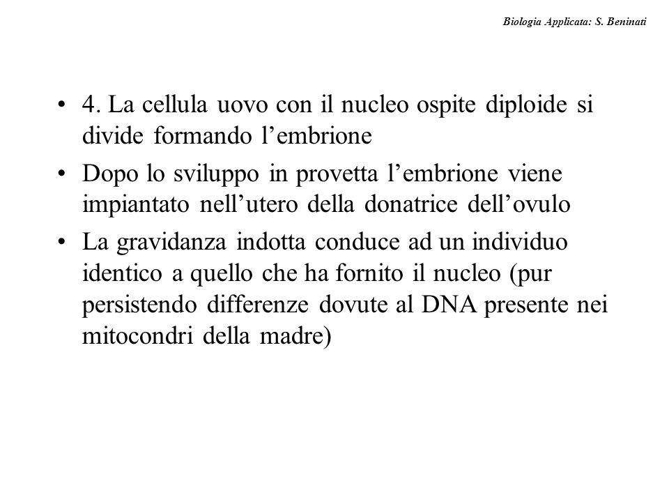Biologia Applicata: S. Beninati 4. La cellula uovo con il nucleo ospite diploide si divide formando lembrione Dopo lo sviluppo in provetta lembrione v