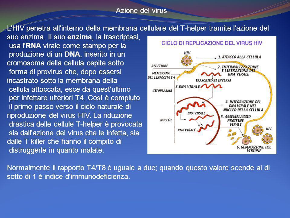 Azione del virus L'HIV penetra all'interno della membrana cellulare del T-helper tramite l'azione del suo enzima. Il suo enzima, la trascriptasi, usa