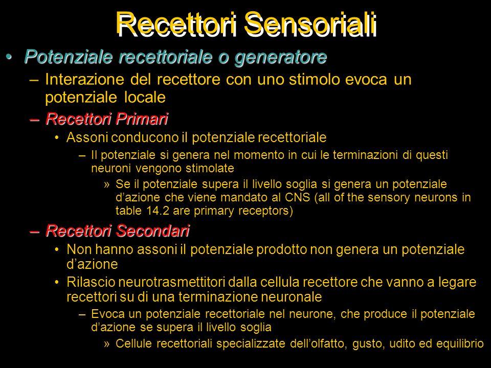 Recettori Sensoriali Potenziale recettoriale o generatorePotenziale recettoriale o generatore –Interazione del recettore con uno stimolo evoca un pote