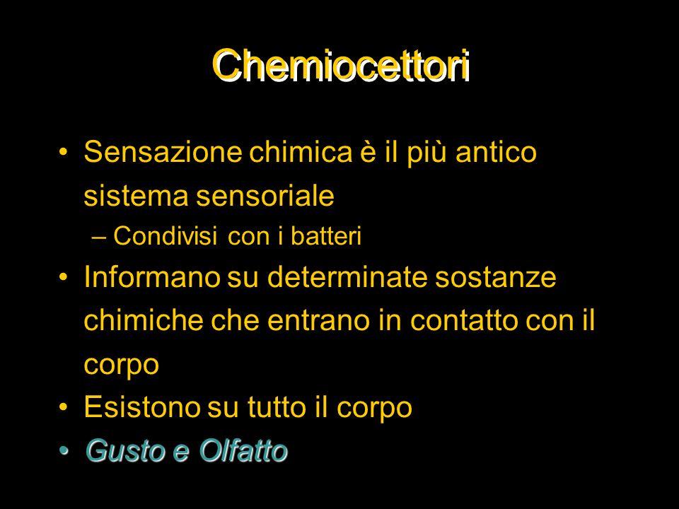 Chemiocettori Sensazione chimica è il più antico sistema sensoriale –Condivisi con i batteri Informano su determinate sostanze chimiche che entrano in