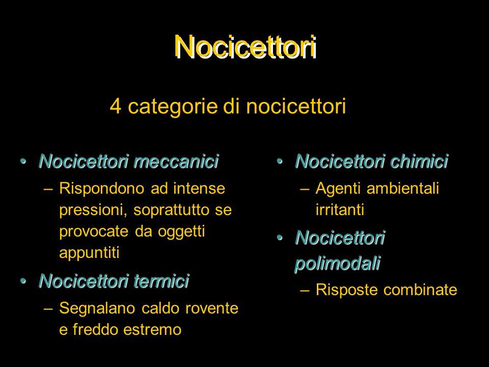 Nocicettori Nocicettori meccaniciNocicettori meccanici –Rispondono ad intense pressioni, soprattutto se provocate da oggetti appuntiti Nocicettori ter