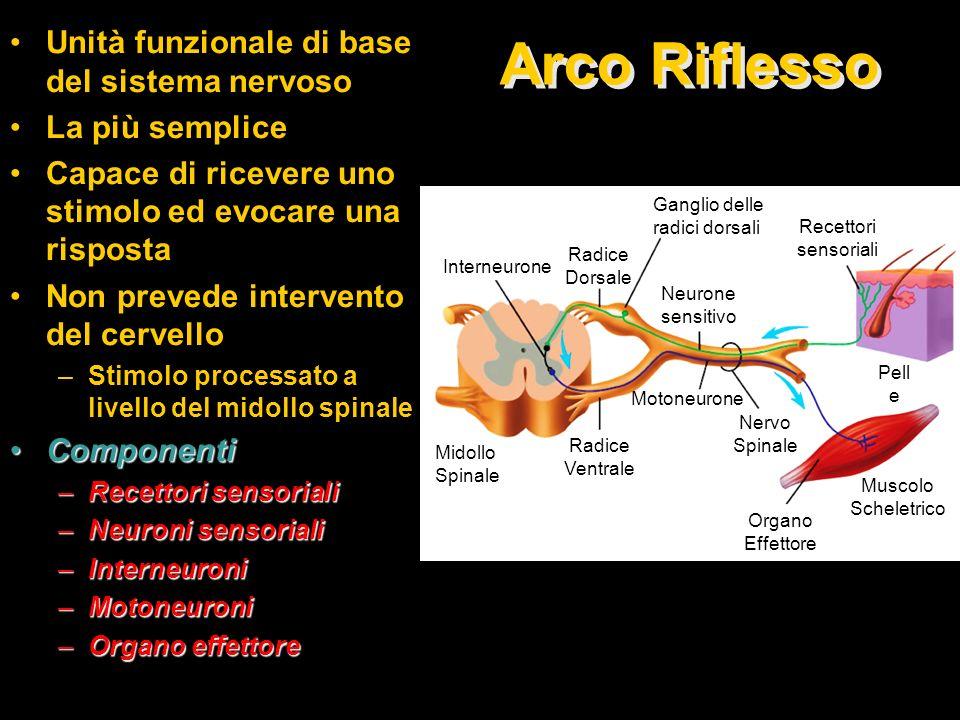 Arco Riflesso Unità funzionale di base del sistema nervoso La più semplice Capace di ricevere uno stimolo ed evocare una risposta Non prevede interven