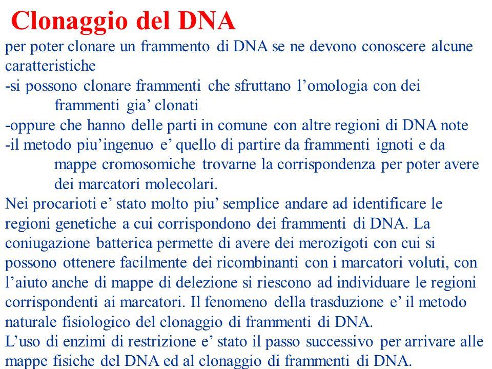 Clonaggio del DNA per poter clonare un frammento di DNA se ne devono conoscere alcune caratteristiche -si possono clonare frammenti che sfruttano lomo
