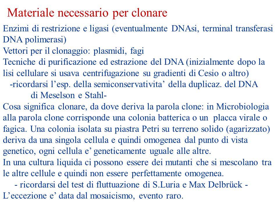 Materiale necessario per clonare Enzimi di restrizione e ligasi (eventualmente DNAsi, terminal transferasi DNA polimerasi) Vettori per il clonaggio: p