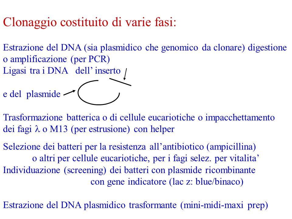 Clonaggio costituito di varie fasi: Estrazione del DNA (sia plasmidico che genomico da clonare) digestione o amplificazione (per PCR) Ligasi tra i DNA