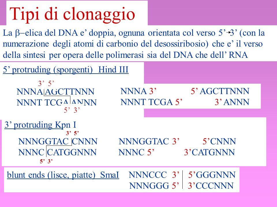 Tipi di clonaggio La elica del DNA e doppia, ognuna orientata col verso 5 3 (con la numerazione degli atomi di carbonio del desossiribosio) che e il v