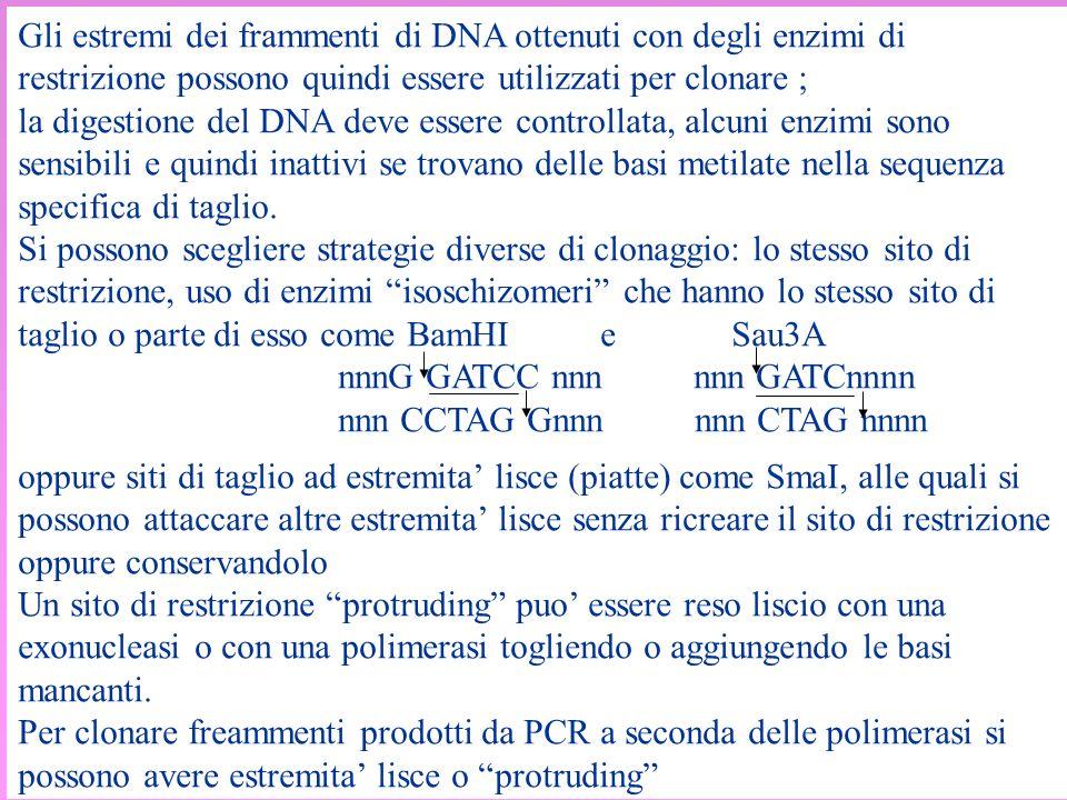Gli estremi dei frammenti di DNA ottenuti con degli enzimi di restrizione possono quindi essere utilizzati per clonare ; la digestione del DNA deve es