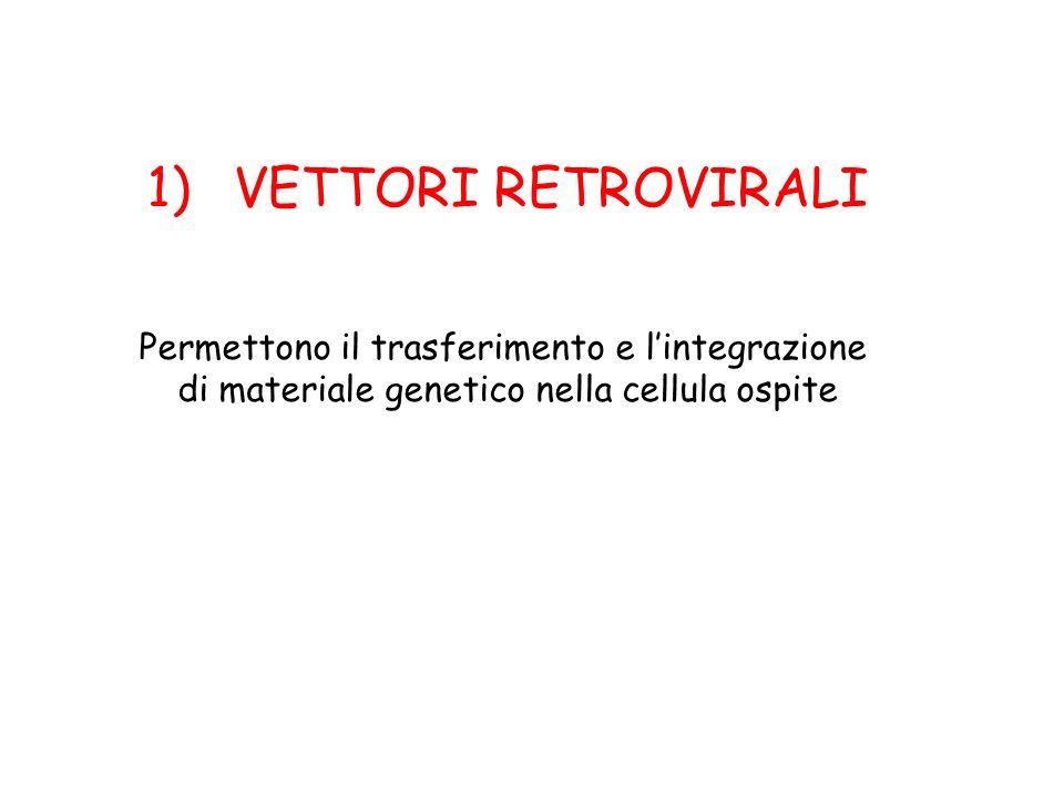 1)VETTORI RETROVIRALI Permettono il trasferimento e lintegrazione di materiale genetico nella cellula ospite