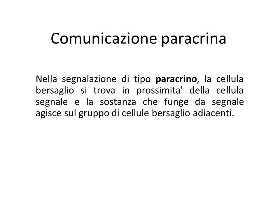 Comunicazione paracrina Nella segnalazione di tipo paracrino, la cellula bersaglio si trova in prossimita' della cellula segnale e la sostanza che fun