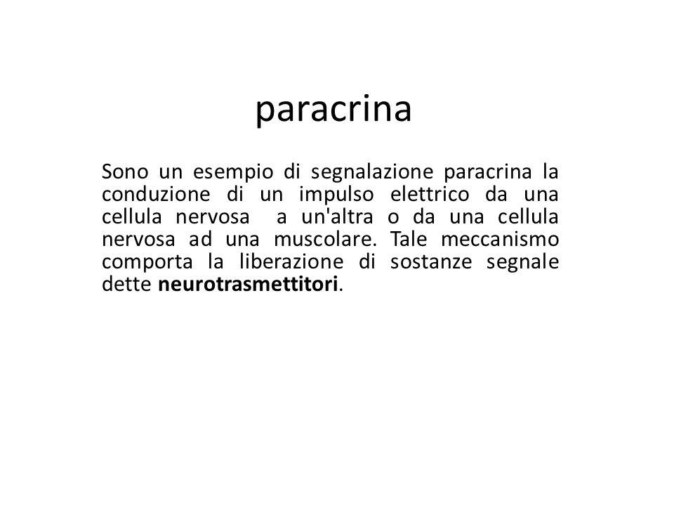 paracrina Sono un esempio di segnalazione paracrina la conduzione di un impulso elettrico da una cellula nervosa a un'altra o da una cellula nervosa a