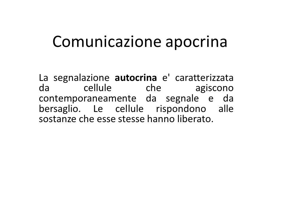 Comunicazione apocrina La segnalazione autocrina e' caratterizzata da cellule che agiscono contemporaneamente da segnale e da bersaglio. Le cellule ri