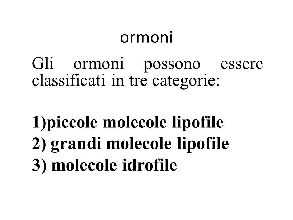 ormoni Gli ormoni possono essere classificati in tre categorie: 1)piccole molecole lipofile 2) grandi molecole lipofile 3) molecole idrofile