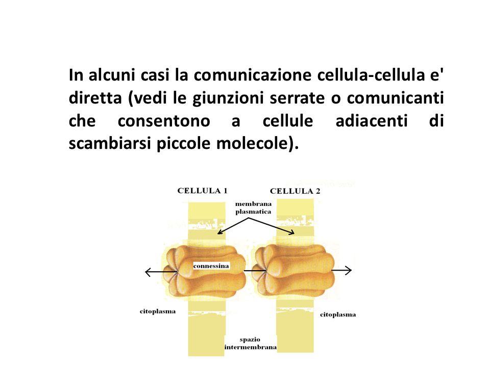 In alcuni casi la comunicazione cellula-cellula e' diretta (vedi le giunzioni serrate o comunicanti che consentono a cellule adiacenti di scambiarsi p