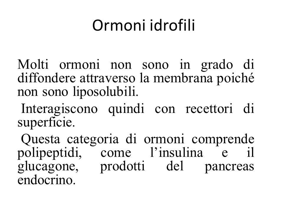 Ormoni idrofili Molti ormoni non sono in grado di diffondere attraverso la membrana poiché non sono liposolubili. Interagiscono quindi con recettori d