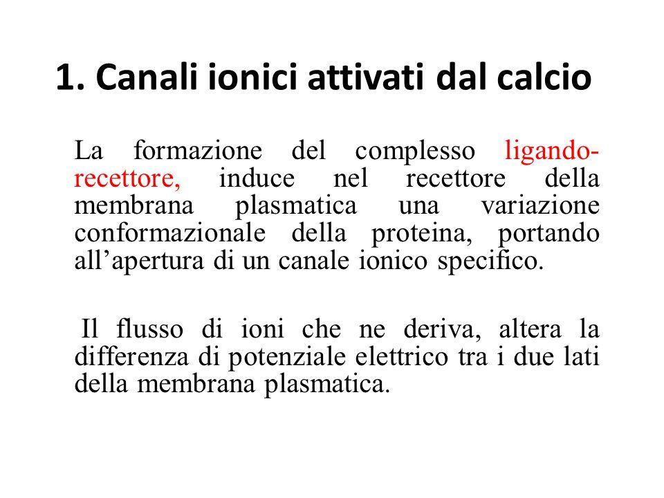 1. Canali ionici attivati dal calcio La formazione del complesso ligando- recettore, induce nel recettore della membrana plasmatica una variazione con
