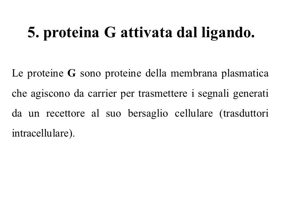 5. proteina G attivata dal ligando. Le proteine G sono proteine della membrana plasmatica che agiscono da carrier per trasmettere i segnali generati d
