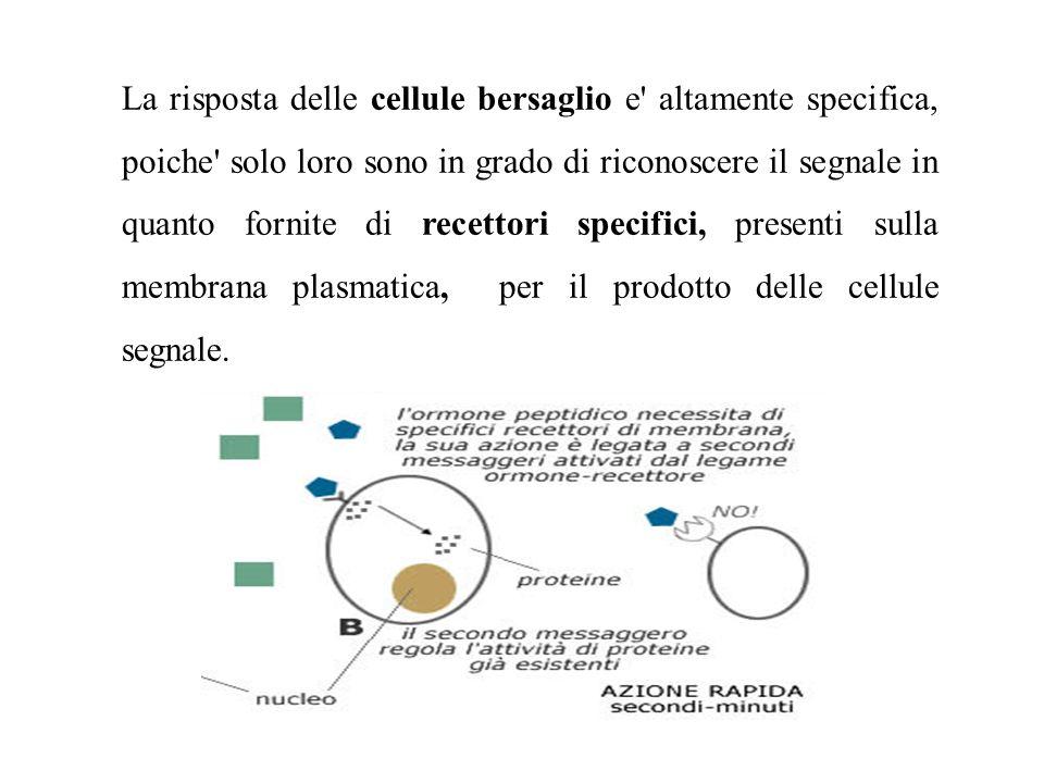 La risposta delle cellule bersaglio e' altamente specifica, poiche' solo loro sono in grado di riconoscere il segnale in quanto fornite di recettori s