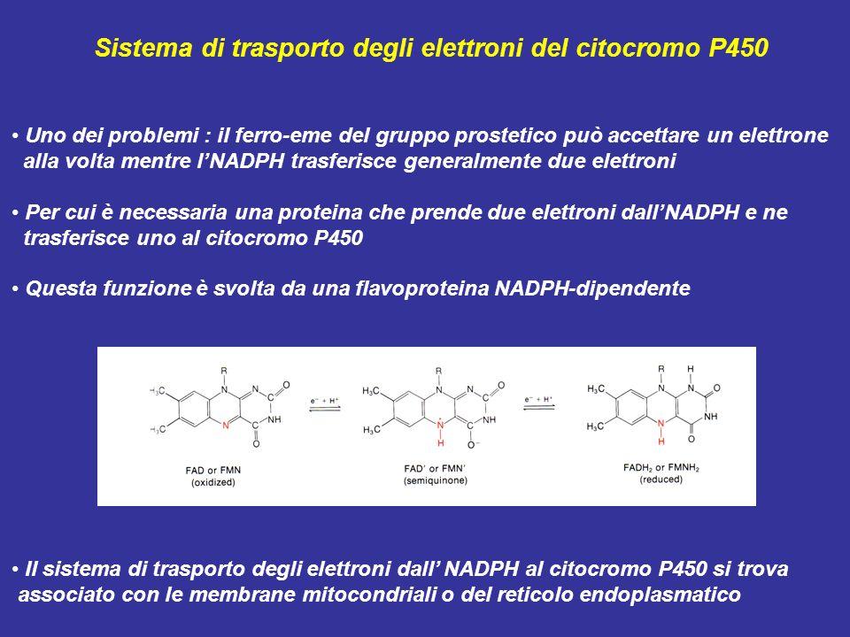 Sistema di trasporto degli elettroni del citocromo P450 Uno dei problemi : il ferro-eme del gruppo prostetico può accettare un elettrone alla volta me