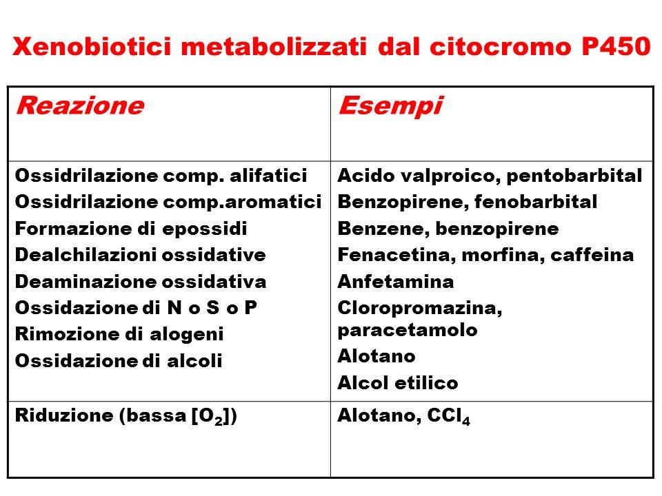 ReazioneEsempi Ossidrilazione comp. alifatici Ossidrilazione comp.aromatici Formazione di epossidi Dealchilazioni ossidative Deaminazione ossidativa O