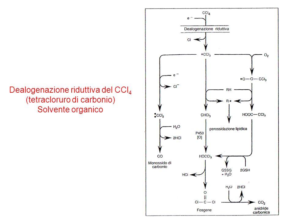 Dealogenazione riduttiva del CCl 4 (tetracloruro di carbonio) Solvente organico
