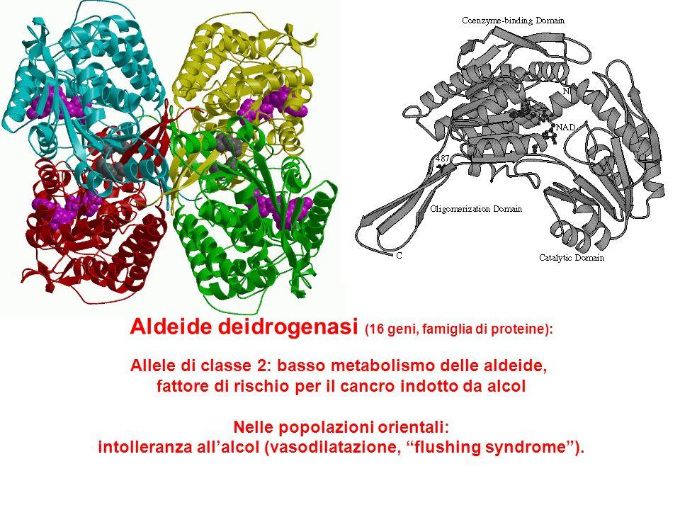 Aldeide deidrogenasi (16 geni, famiglia di proteine): Allele di classe 2: basso metabolismo delle aldeide, fattore di rischio per il cancro indotto da
