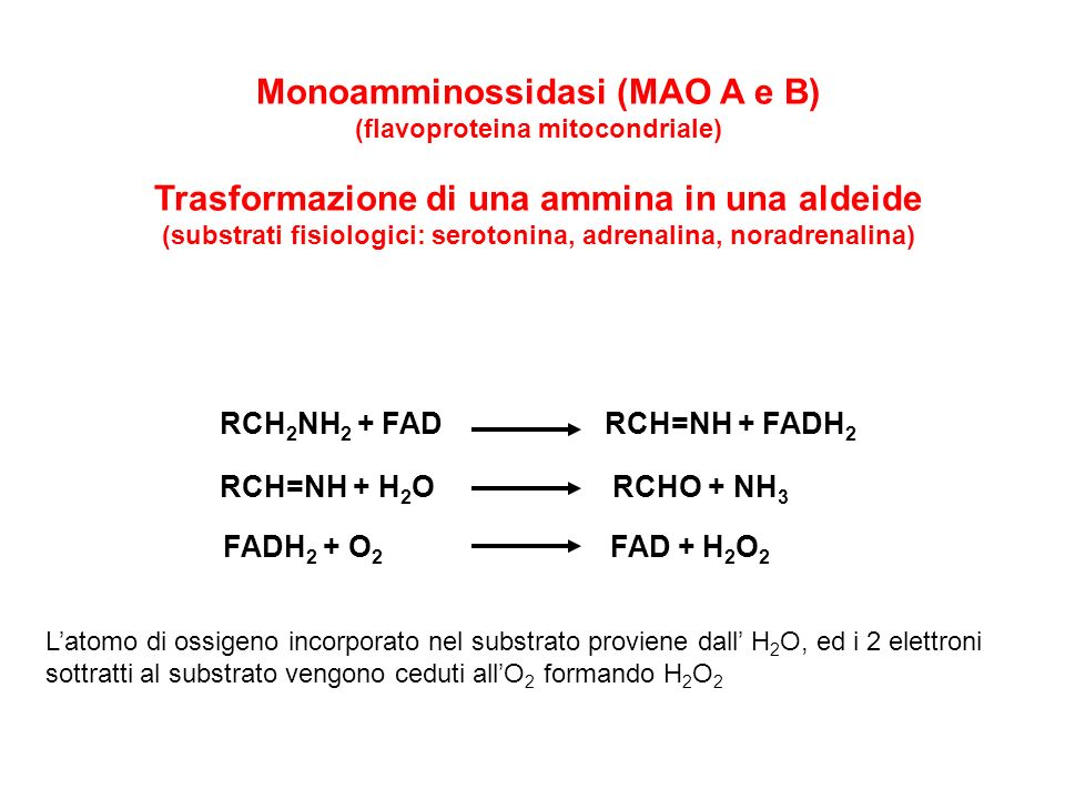 Monoamminossidasi (MAO A e B) (flavoproteina mitocondriale) Trasformazione di una ammina in una aldeide (substrati fisiologici: serotonina, adrenalina
