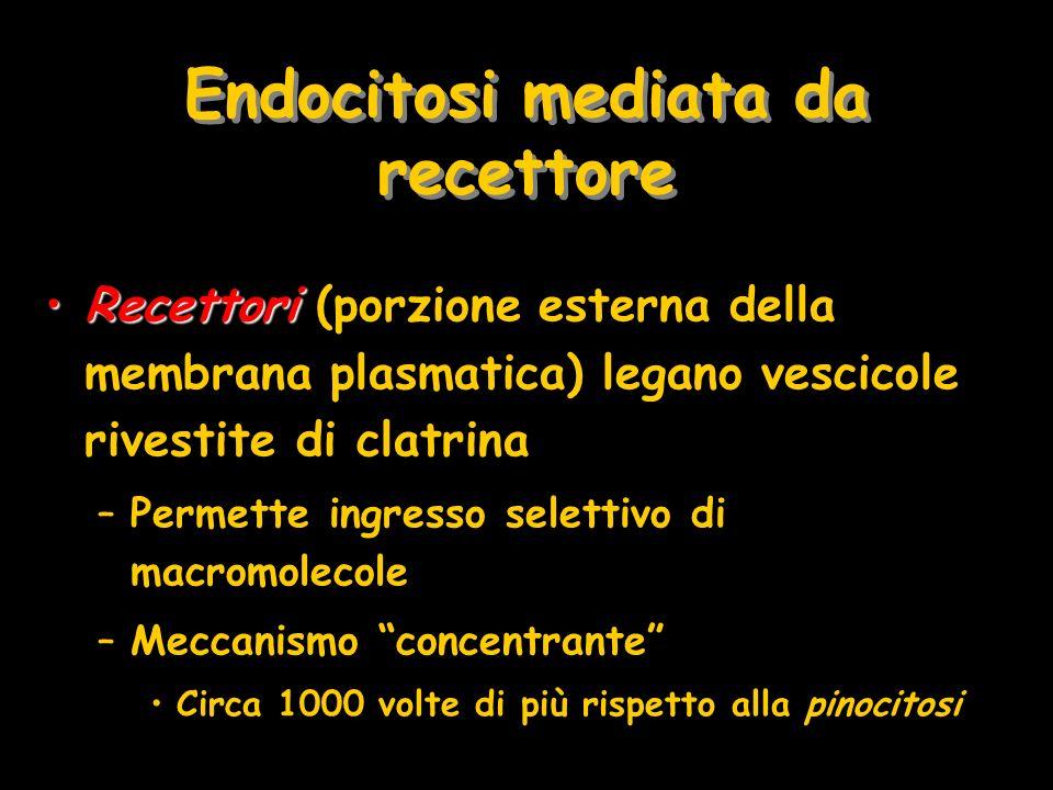 Endocitosi mediata da recettore RecettoriRecettori (porzione esterna della membrana plasmatica) legano vescicole rivestite di clatrina –Permette ingre