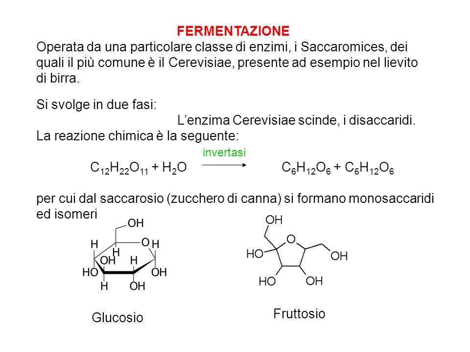 Si svolge in due fasi: Lenzima Cerevisiae scinde, i disaccaridi. La reazione chimica è la seguente: C 12 H 22 O 11 + H 2 O C 6 H 12 O 6 + C 6 H 12 O 6