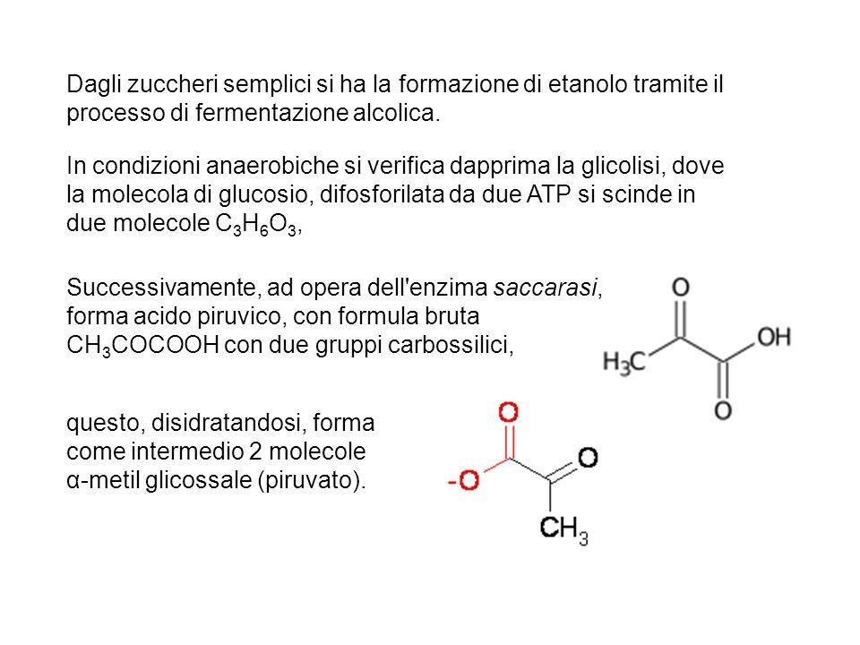 Dagli zuccheri semplici si ha la formazione di etanolo tramite il processo di fermentazione alcolica. questo, disidratandosi, forma come intermedio 2