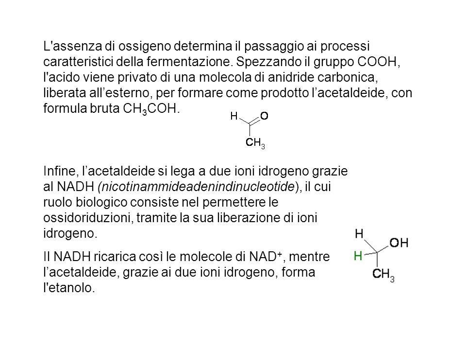 L'assenza di ossigeno determina il passaggio ai processi caratteristici della fermentazione. Spezzando il gruppo COOH, l'acido viene privato di una mo