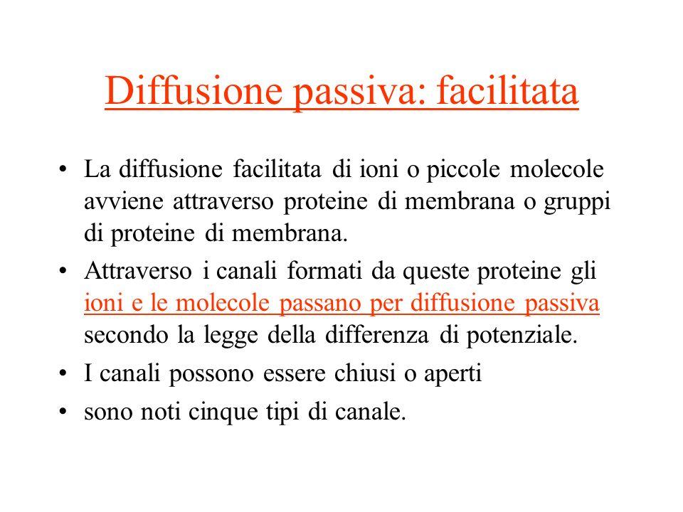 Diffusione passiva: facilitata La diffusione facilitata di ioni o piccole molecole avviene attraverso proteine di membrana o gruppi di proteine di mem