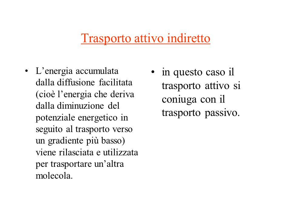 Trasporto attivo indiretto Lenergia accumulata dalla diffusione facilitata (cioè lenergia che deriva dalla diminuzione del potenziale energetico in se