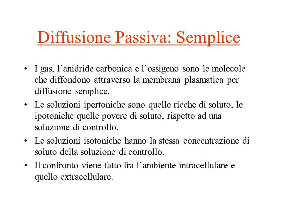 Diffusione Passiva: Semplice I gas, lanidride carbonica e lossigeno sono le molecole che diffondono attraverso la membrana plasmatica per diffusione s