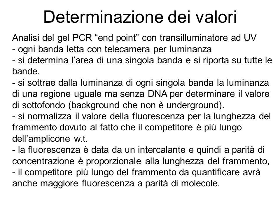 Determinazione dei valori Analisi del gel PCR end point con transilluminatore ad UV - ogni banda letta con telecamera per luminanza - si determina lar