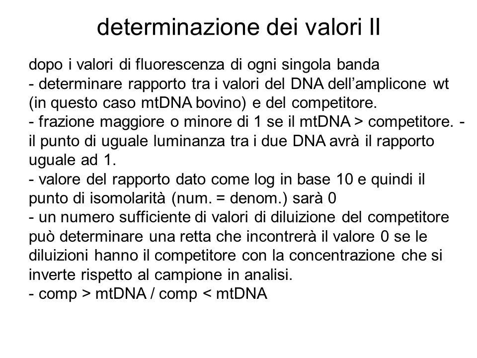 determinazione dei valori II dopo i valori di fluorescenza di ogni singola banda - determinare rapporto tra i valori del DNA dellamplicone wt (in ques