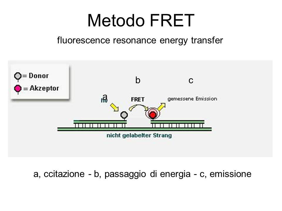 Metodo FRET a, ccitazione - b, passaggio di energia - c, emissione a bc fluorescence resonance energy transfer